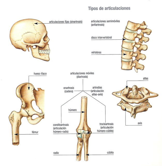 Page 2 for juego el cuerpo humano exterior e interior for Interior del cuerpo humano