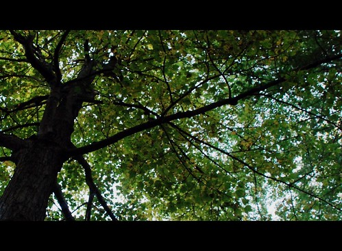 Tree - leaf canopy