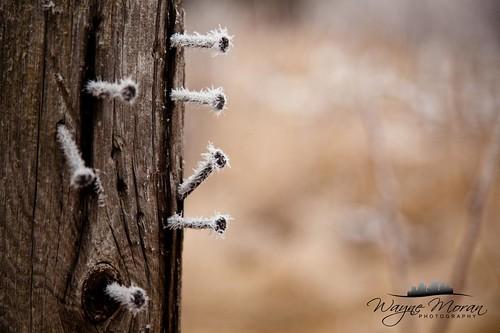 Hoarfrost, Eagan Minnesota by !!WaynePhotoGuy