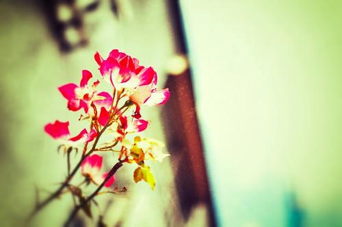 D7K_3662_Snapseed