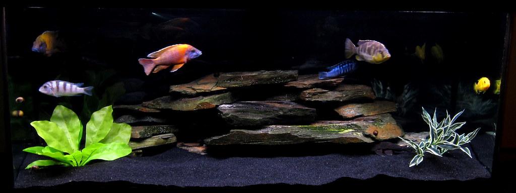 Cichlid forum white vs black sand for Black sand fish tank
