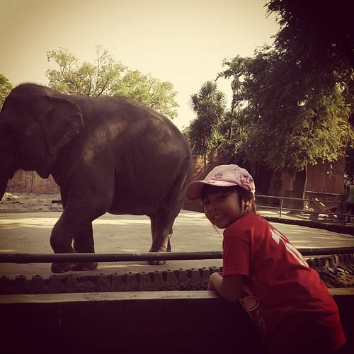 Sobrang Excited nong nakita ang elephant. @ Manila Zoo