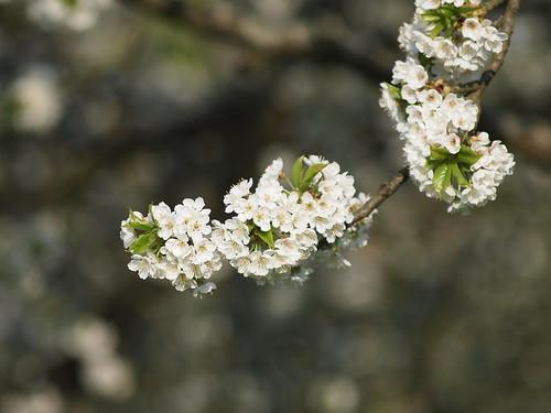 spring walk (1)