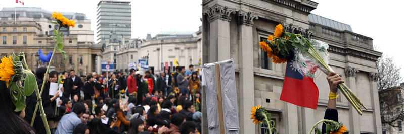 sunflower protest. the london project