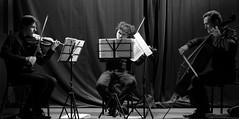 Festival violoncelle