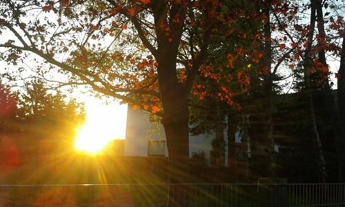 trees light sunset red sun white house tree leaves garden golden sonnenuntergang samsung hff samsunggti8200n