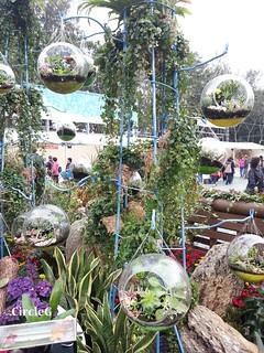CIRCLEG 遊記 維多利亞公園 銅鑼灣 花展 2016 (22)