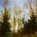 La plantation...!!! by Denis Collette...!!!