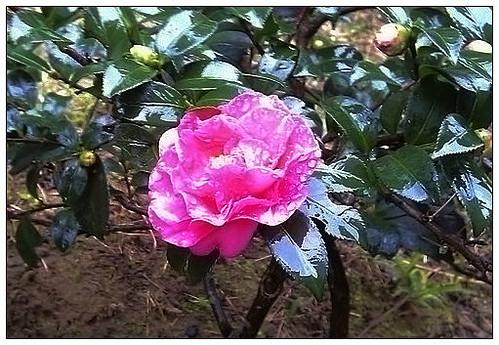 20111123花