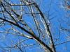 texture su cielo blu