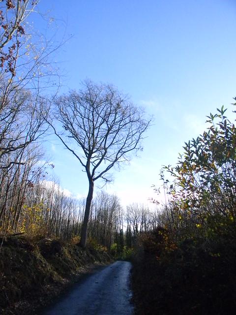 Through chestnut woods