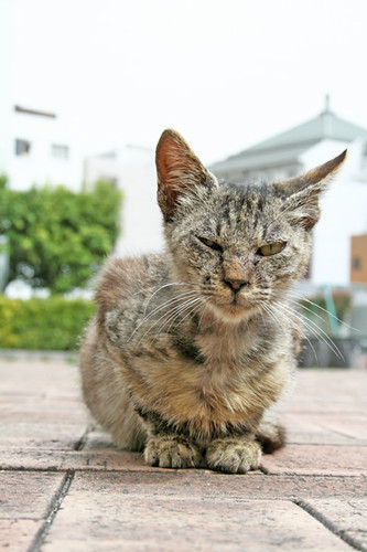 homeless cat @kyoto, japan