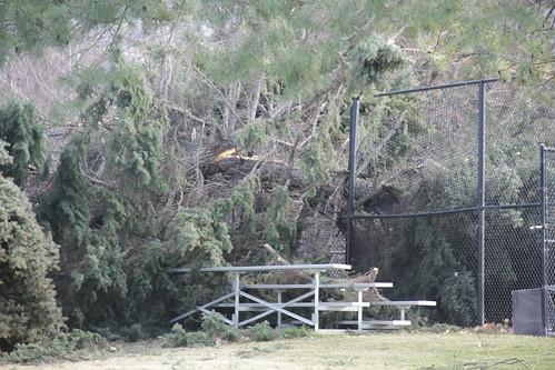 Wind Storm 023