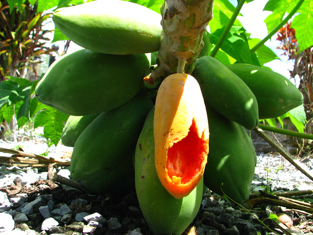 native fruits of guyana