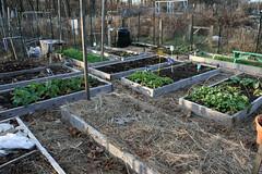 winter gardens 025
