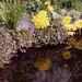 川面の花々
