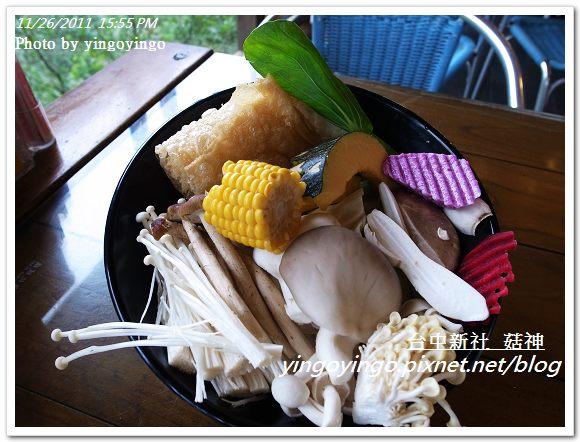 台中新社_菇神20111126_R0044212
