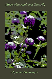 Globe Amaranth And Butterfly