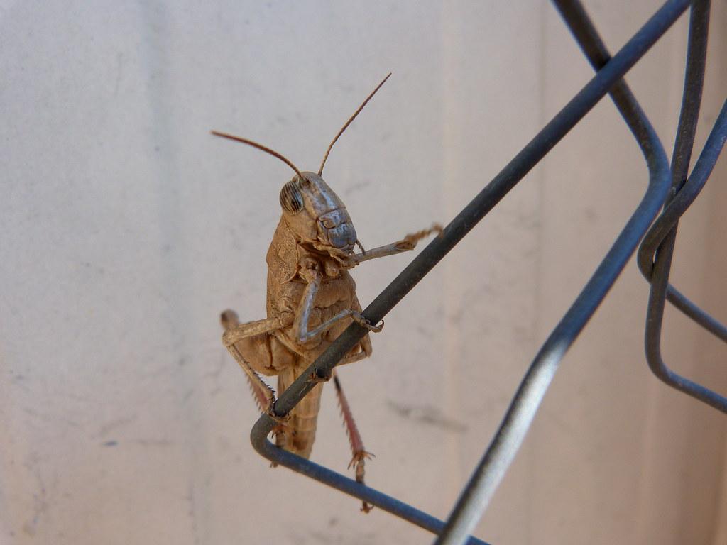 23-11-2011-grasshopper5