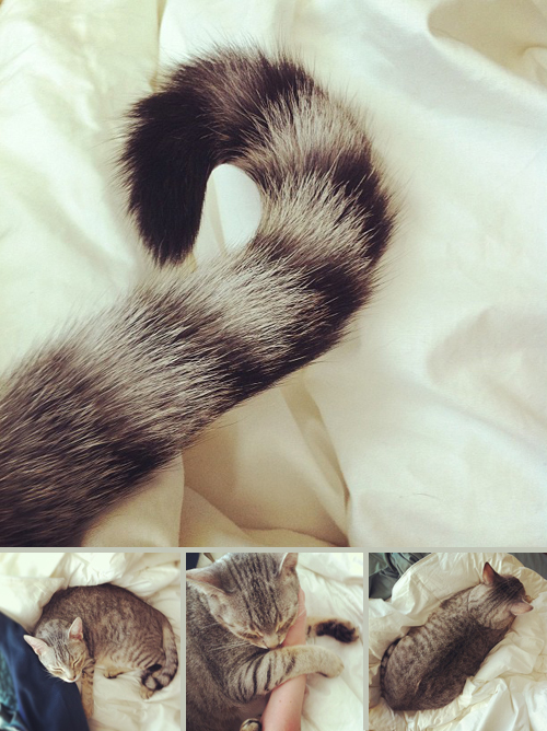 kittens_turks_12.6.11
