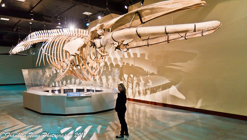 Los Angeles Museum Natural History- This is HUGE!