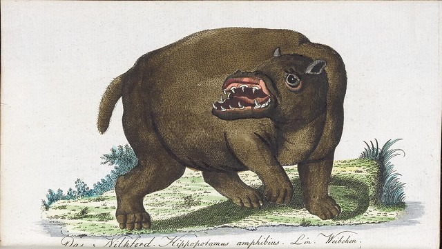 hand-coloured engraving of Hippopotamus