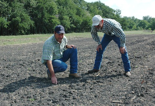 Stuart Fisher, left, shows NRCS soil scientist Tom Clark new grass growth.