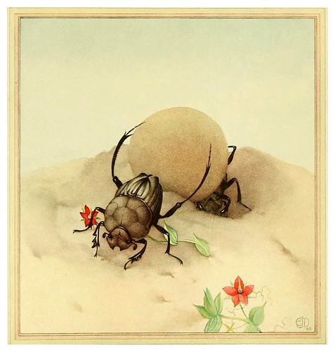 033-El sisyphus- Fabre's book of insects ..1921-Ilustrado por Edward Detmold