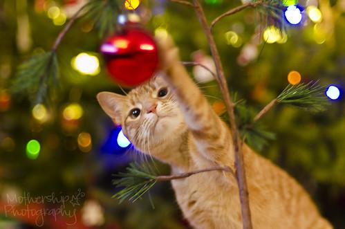 圣诞节的故事(4个中的4个)