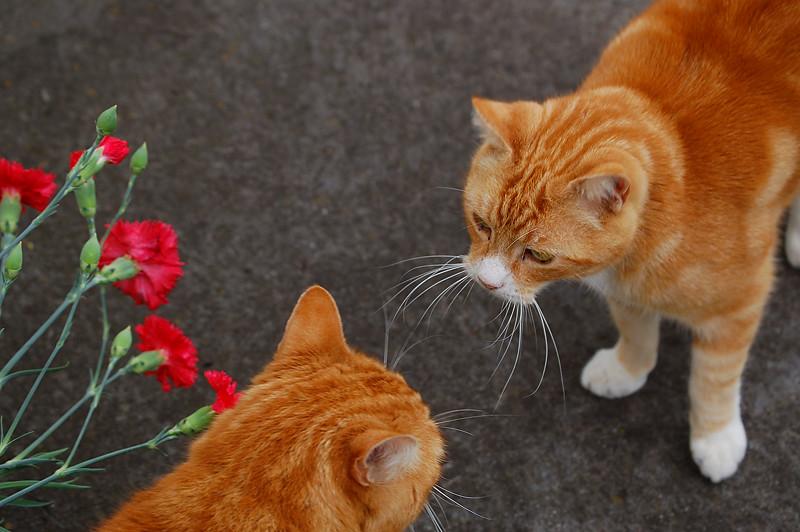 _summer_cats_