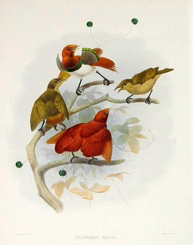 020-Aves del paraiso King-A Monograph of the Paradiseidae-1873 D.G. Elliot