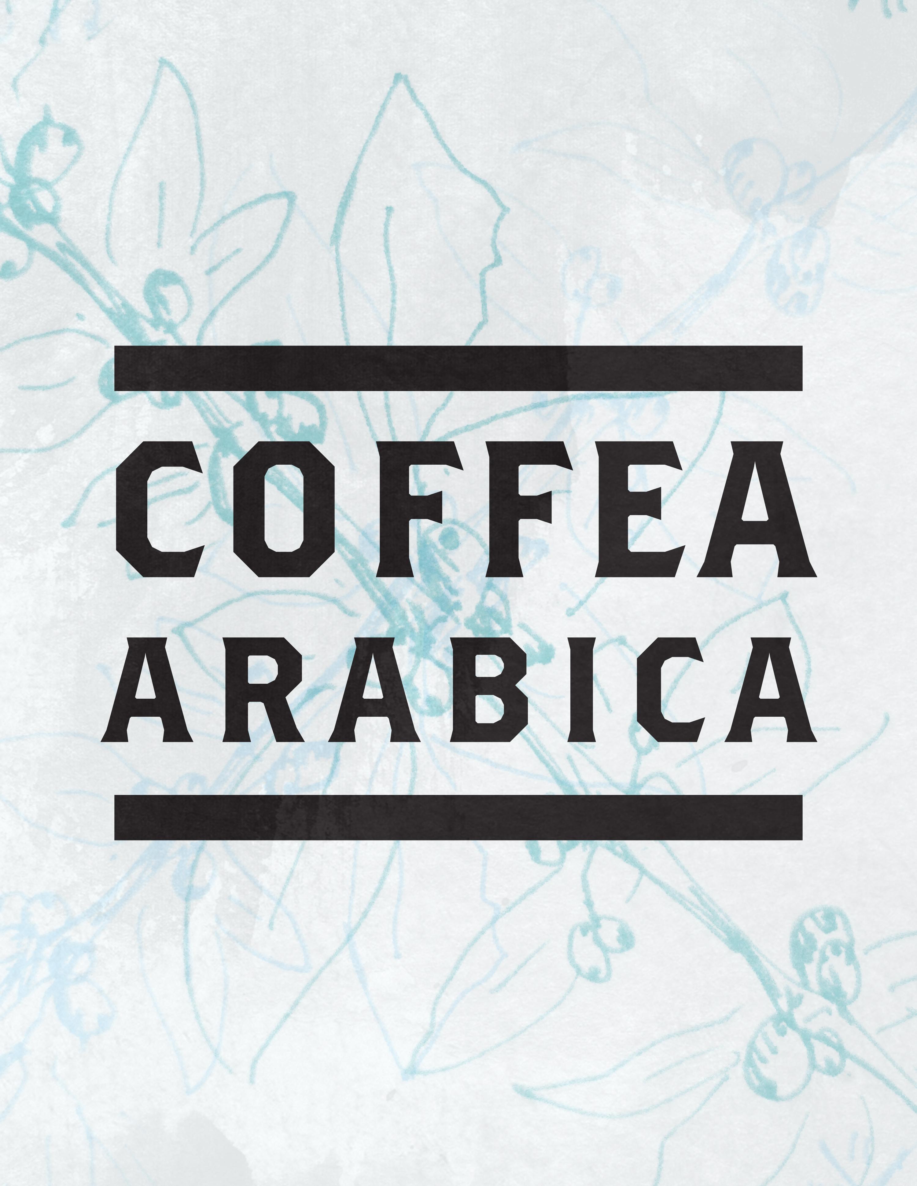 cofea arabica