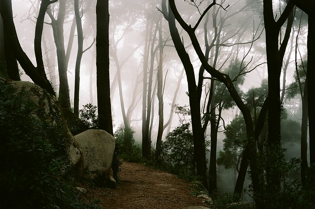 forest, sintra