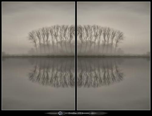 trees mist field fog sunrise canon blackwhite belgium belgique mirrors belgië 1020mm erlend willows muizen 60d erroba robaye