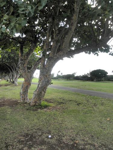 Hawaii Kai Golf Course 075b