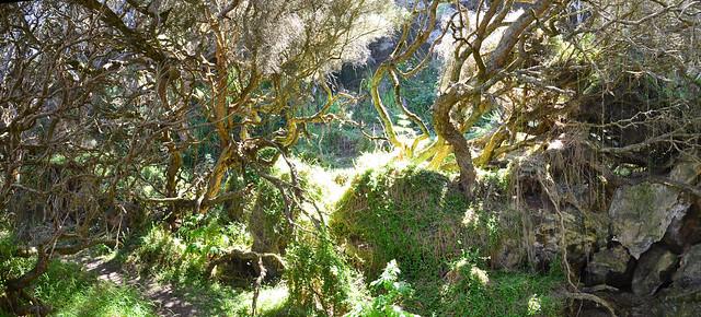 Enchanted Forest A
