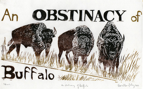 an OBSTINACY of buffalo