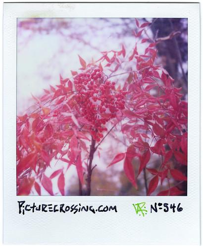 PX No.546 by LANCEPHOTO