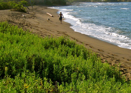 A man, his dogs, and a National Park in Hawai'i...
