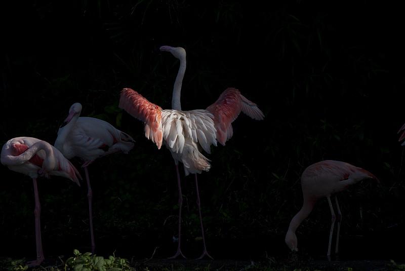 動物園鳥兒隨拍