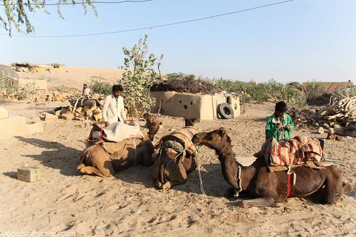 Readying the Camels
