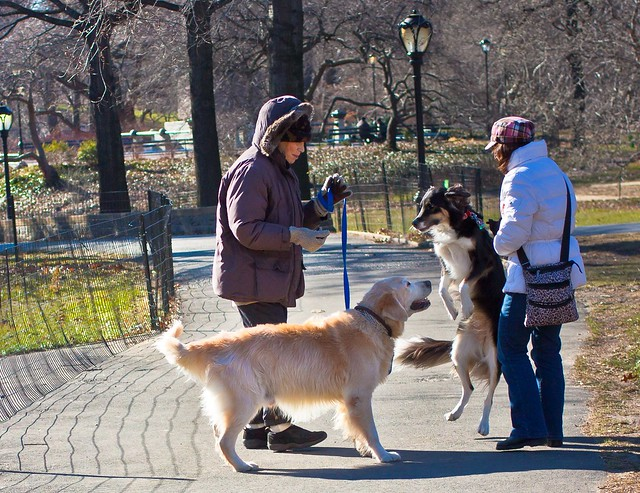 20120120-two new york dogs in centralParkIMG_3694.jpg