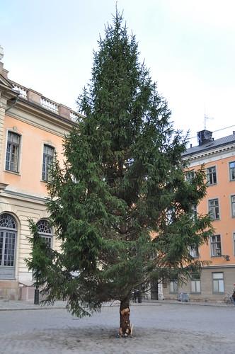 2011.11.10.204 - STOCKHOLM - Gamla stan - Stortorget