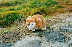 [フリー画像素材] 動物 1, 猫・ネコ ID:201201271000
