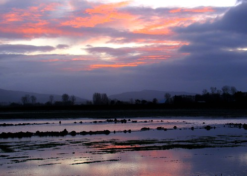 01-23-12 Flooded Fields at Sunrise by roswellsgirl
