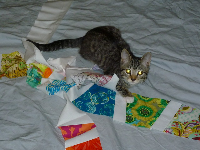 sewing with cats
