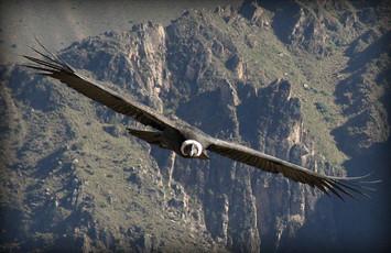 impresionante-vista-de-condor-choquequirao-cusco-peru