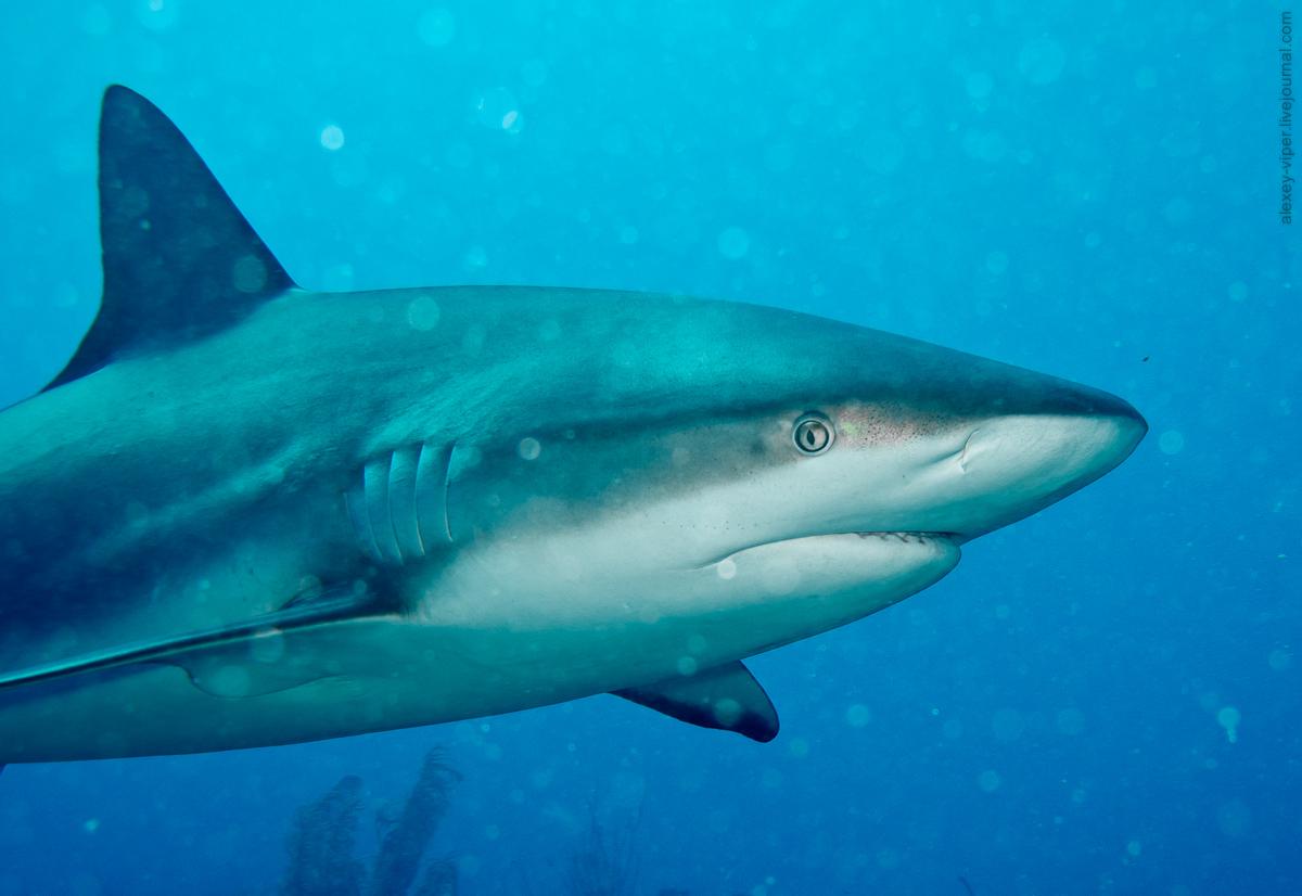 2012.01.12-2012.01.26_dive_safari_[cuba]-diving-015