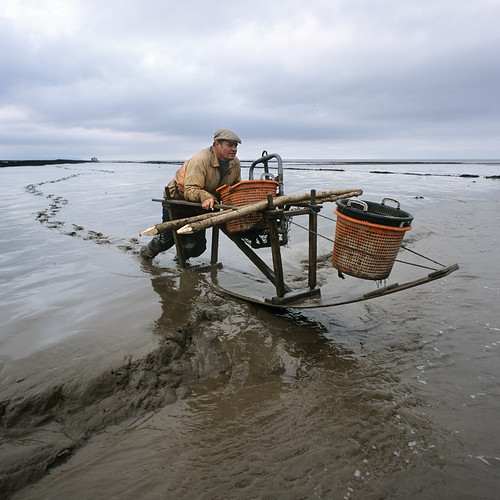Mudhorse fisherman