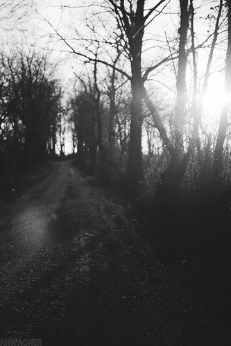 road trees sunset blackandwhite bw sun nature 35mm canon eos blackwhite dof bokeh f14 7d gravel 35l f14l blackwhitephotos